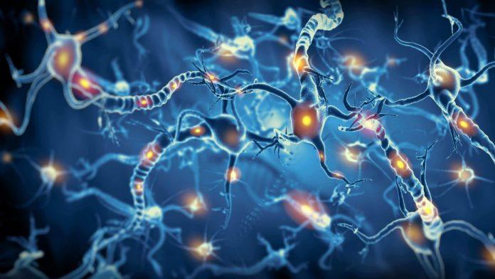 Crean neuronas que pueden integrarse en tejido cerebral